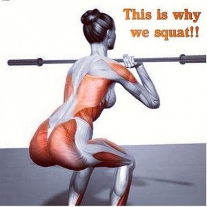squat muscles