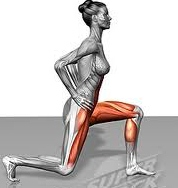 lunge-muscles